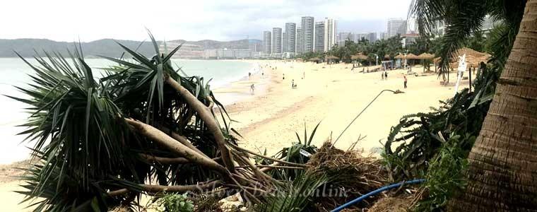 16 сентября 2018 в гардене Silver Beach Huizhou прошел мощный тайфун